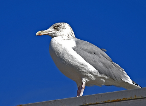Bird against a blue sky